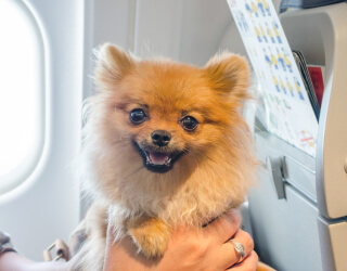 Flying with your Service Animal